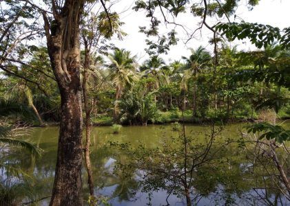 Bang Krachao: a day out in Bangkok's very own jungle