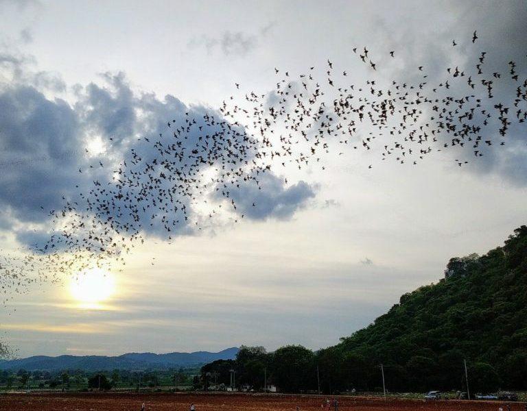 Khao Yai National Park: weekend jungle luxury on a budget 1