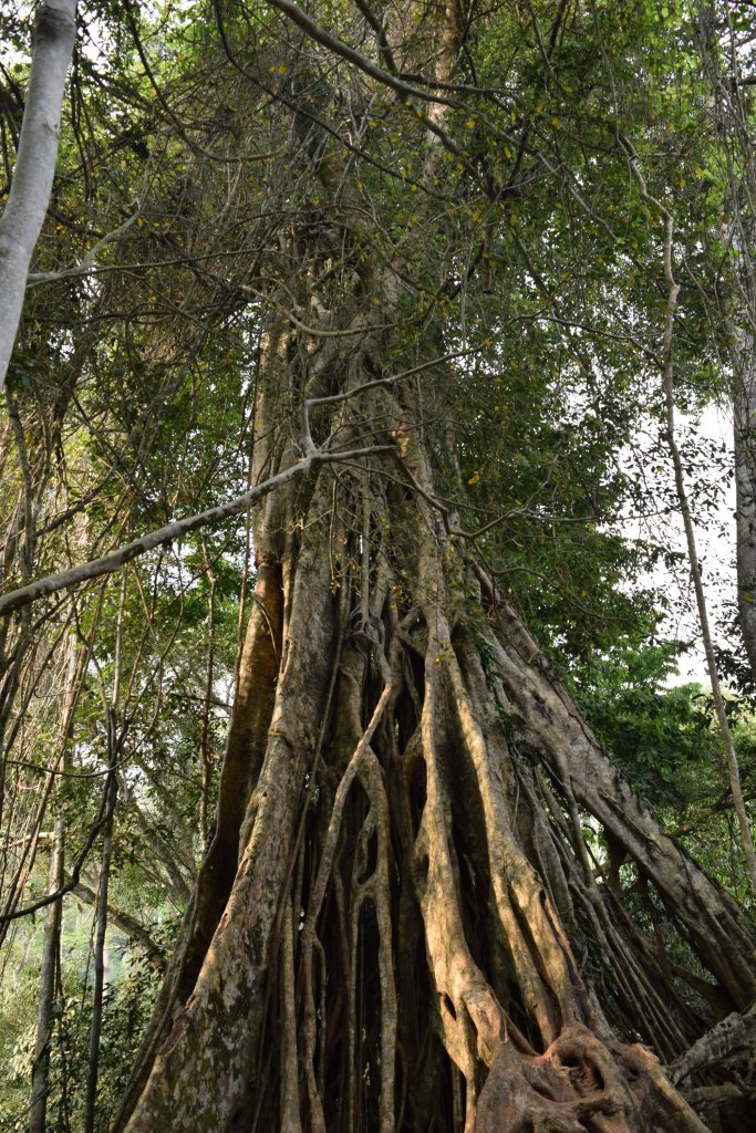 Khao Yai jungle tour hiking