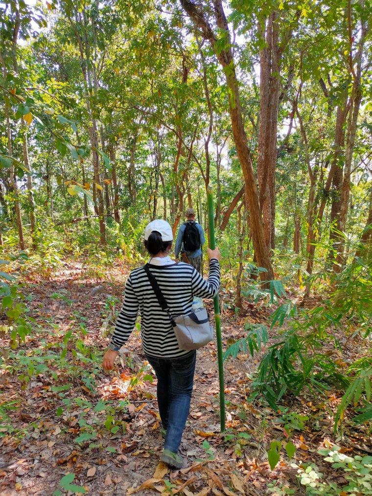The Mae Salong loop: An easy Northern Thailand road trip 1