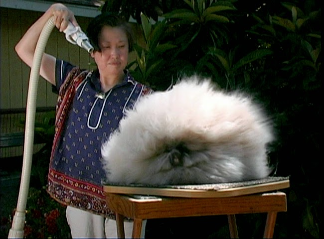 Angora Rabbit,betty chu (12)