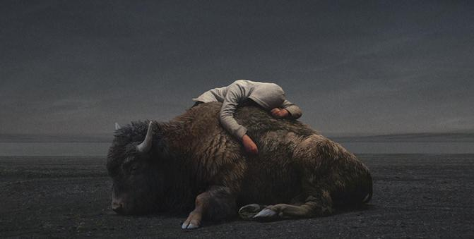 yuri-shwedoff-buffalo-recovered-internet-990x500