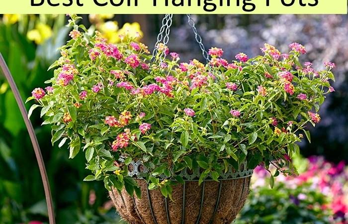 Best coir hanging baskets | Coir baskets