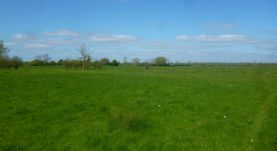 open pastures on the Thames Path near Godstow