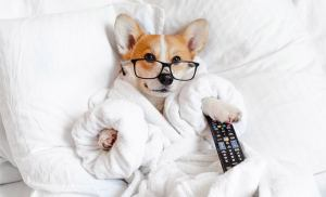 Puppy Schedule A Foolproof Guide 1 Puppy Schedule- A Foolproof Guide