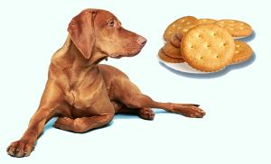 Dog and Cracker 1 Can Dogs Eat Crackers: What Dog Owners Should Know