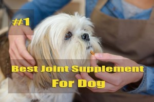 Best Joint Supplement for Dogs: How to Choose the Best One?
