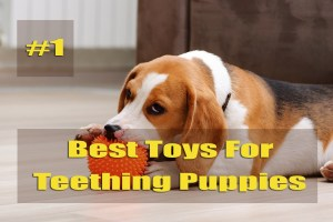 Best Toys For Teething Puppies Review 2021