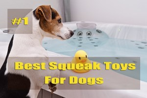 Best squeak toys for dog which is for yours