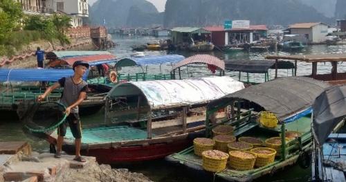 Giá trị sản xuất thủy sản tăng 7,4%