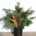 """""""Spruce up"""" by pruning boughs from evergreens to make porch pots"""