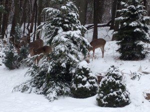 """Oh deer....these cute little guys stopped by my backyard for a """"tree""""-t.....they're just trying to have a little """"fawn"""""""