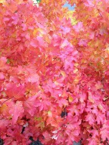 """""""Raking"""" up is hard to do....so why not instead harvest and harness the benefits of fallen foliage?"""
