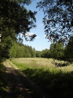 HM + 30 km - immer noch die Triebischwiesen