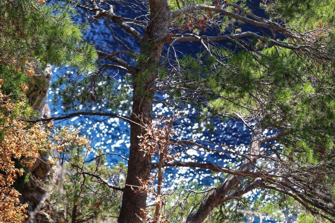 trees and sea capri
