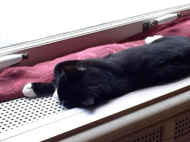 2 Days In Amsterdam - Travel Tales: Kattenkabinet Cat
