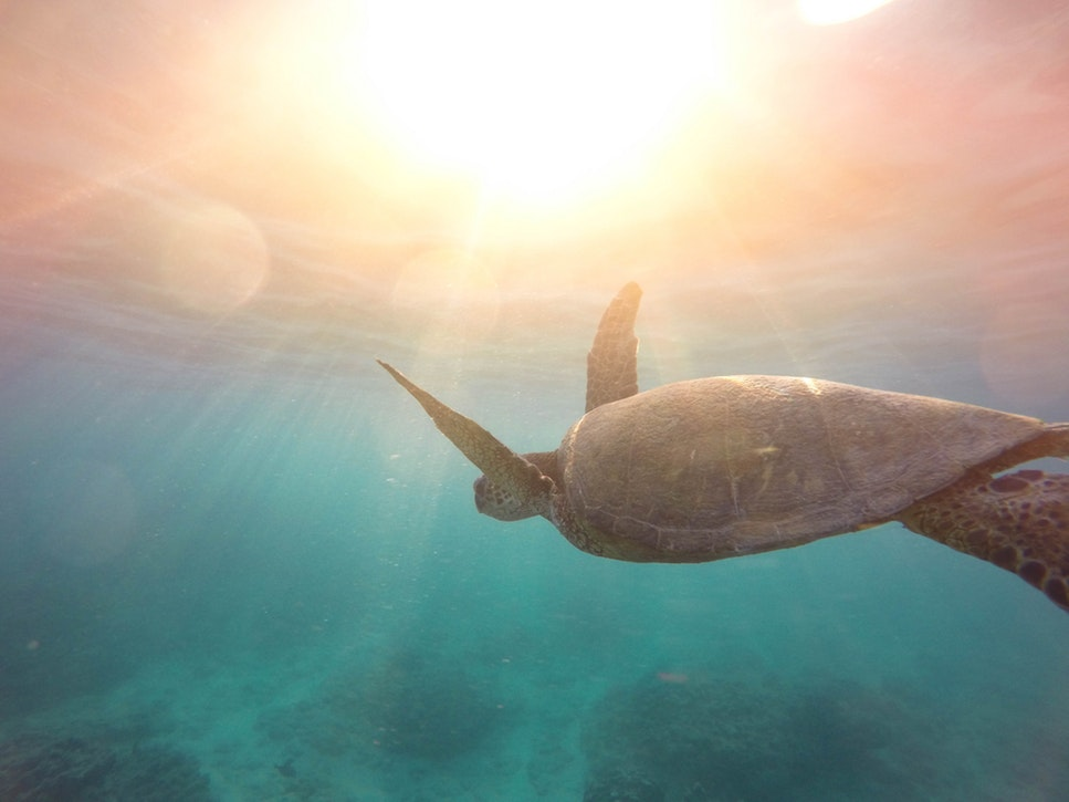 Hawaii Bucket List - Turtle in the sea