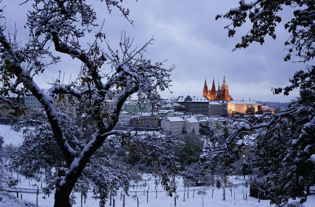 Snow on trees and buildings near Prague Castle