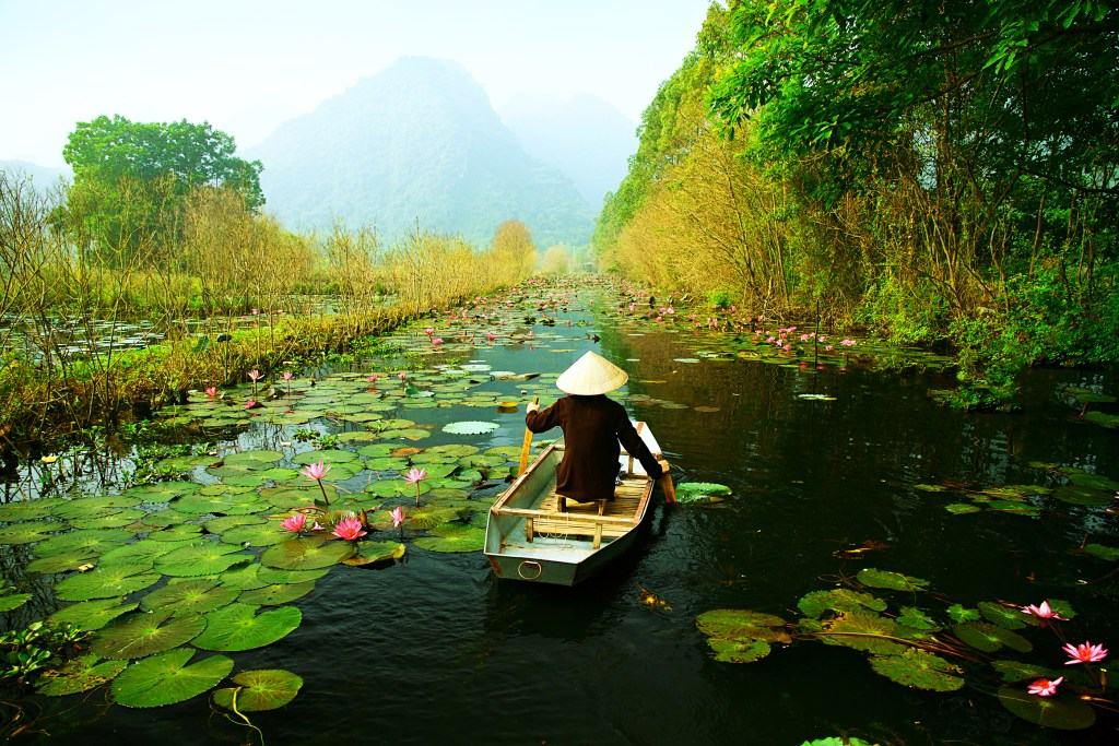 A person paddles a boat in a river full of lilies near Hanoi, Vietnam. This is a popular destination for budget travelers.