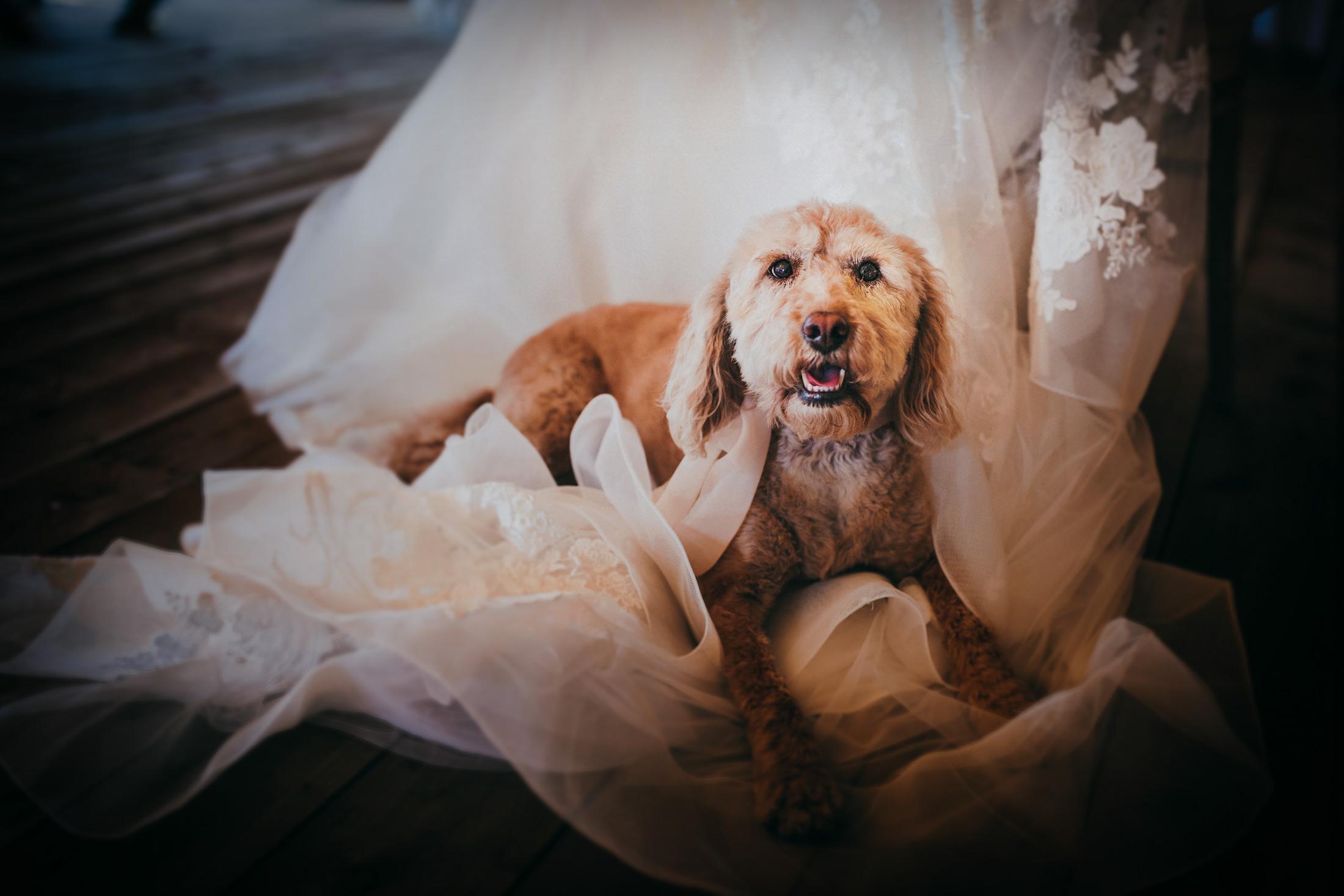 Woodland Wedding - nottingham outdoor wedding venue - east midlands wedding planner - dog at wedding