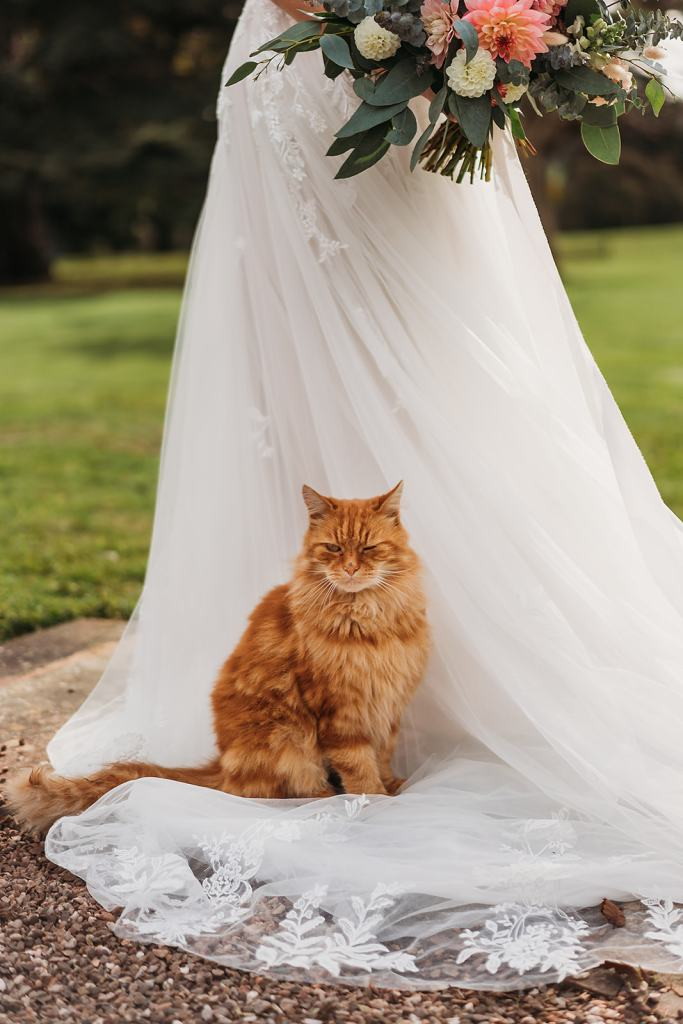Lord of the Manor - Arthur from Fillongley Hall, Warwickshire marquee venue - Ginger cat sitting on brides dress