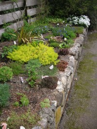 how to build a rock garden | That Bloomin' Garden
