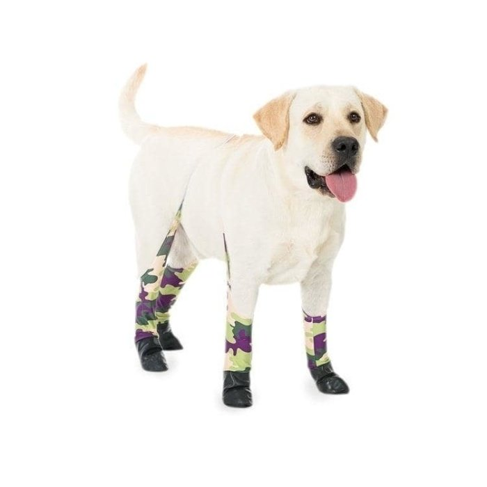 Development phase of the product life cycle example - legging for dogs
