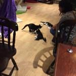 Cats playing at Lady Dinah's Cat Emporium