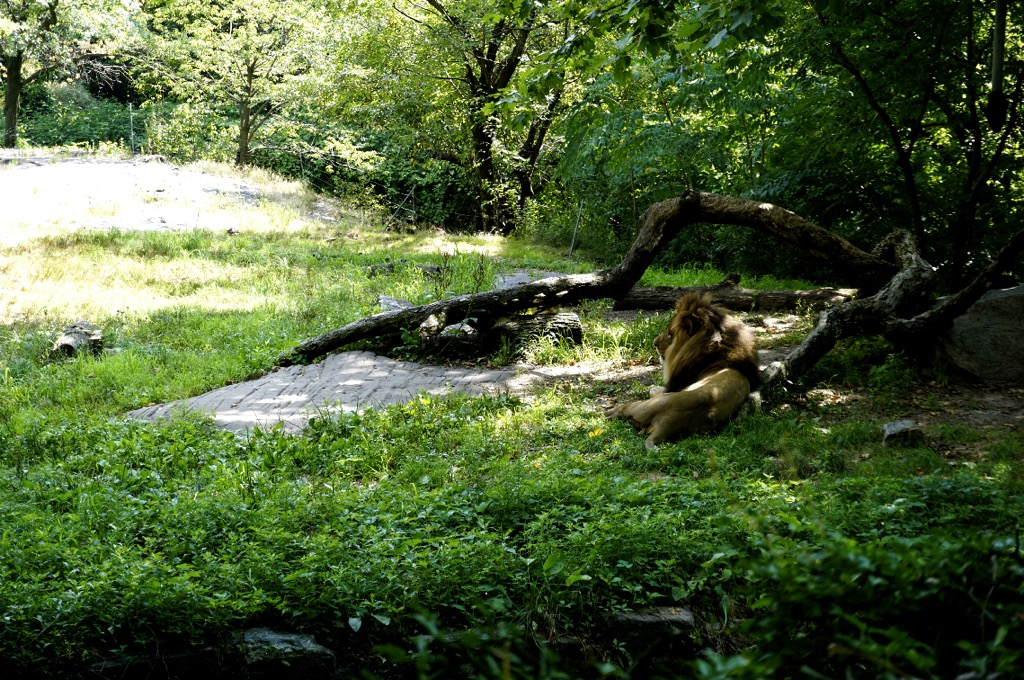 What It Was Like to Visit the Bronx Zoo During the Pandemic