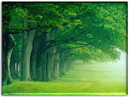 trees forest