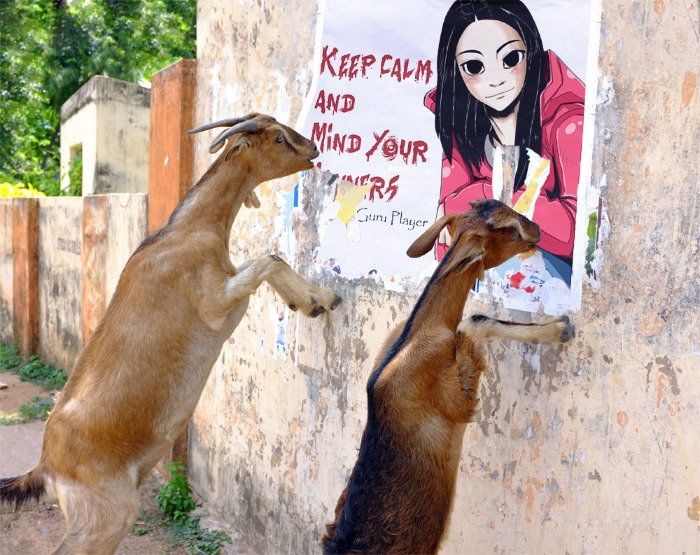 dramaguru keep calm and mind your manners goats eating poster