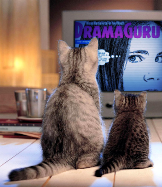 PhotoFunia dramaguru magazine 2 cats computer girl