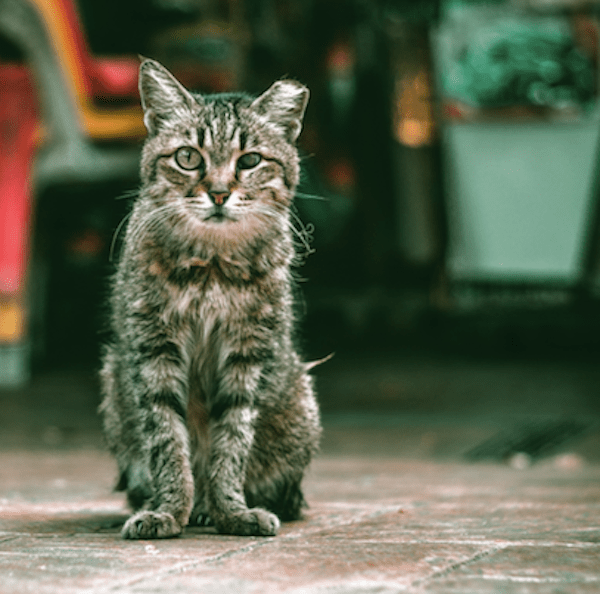 distressed cat unsplash lily lvnatikk