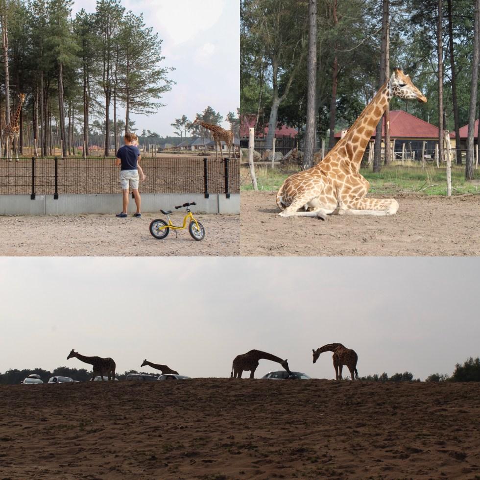 Beekse Bergen, safaripark, safari, safari resort, bij de leeuwen, vakantiepark. uitje met kinderen, vakantie in eigen land, Hilvarenbeek, thathomepage, giraffen, savanne
