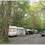 Camping in the Forest: Beddgelert Camp Site