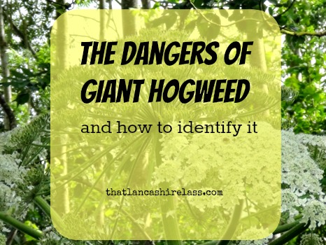 Giant Hogweed title