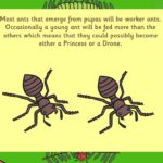 Learn about: the life cycle of ants