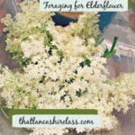 Foraging for Elderflower