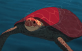 The Meaning of The Red Turtle: Nature's Beautiful Chaos