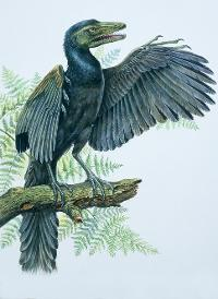 Paleoart of Archaeopteryx sat on a branch