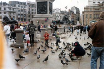 Pigeons, Trafalgar Square