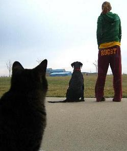 Cat watches black dog and woman standing in an field