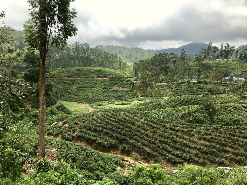 The Hill Country is de mooiste regio van Sri Lanka