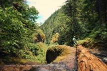 Hike Lead 4 Breathtaking Waterfalls In