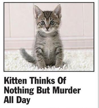 Kittenmurder1