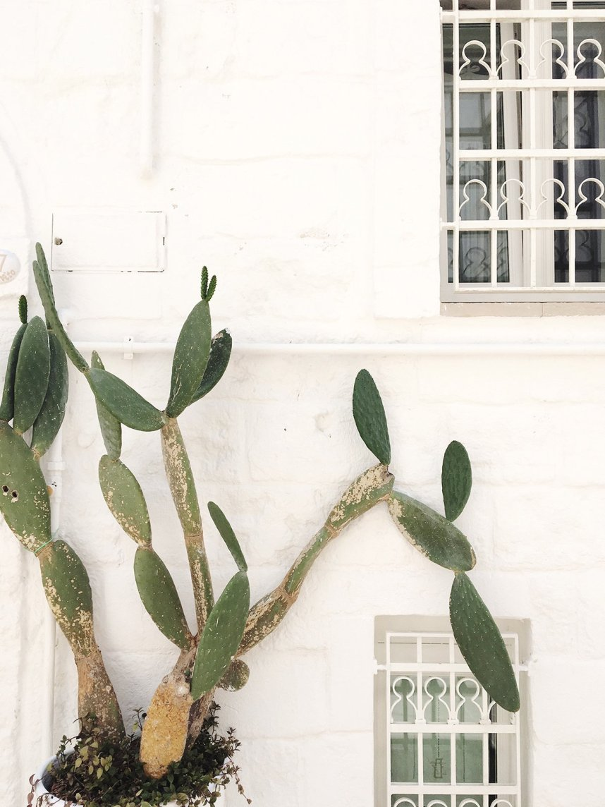 puglia_monopoli_fichidindia_cactus_plant