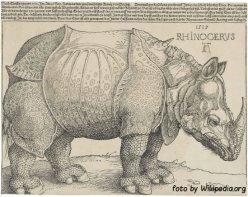 Dürer's_Rhinoceros,_1515