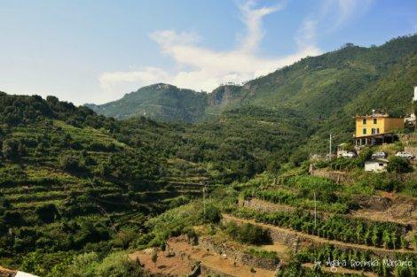 corniglia,cinque,terre,liguria,wlochy,wino