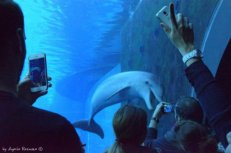 dolphine shooting genoa