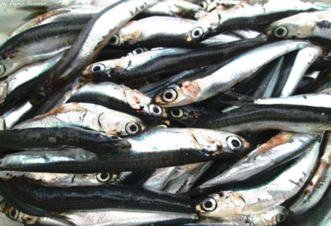 Acciuga, ryba której należy spróbować w Ligurii!